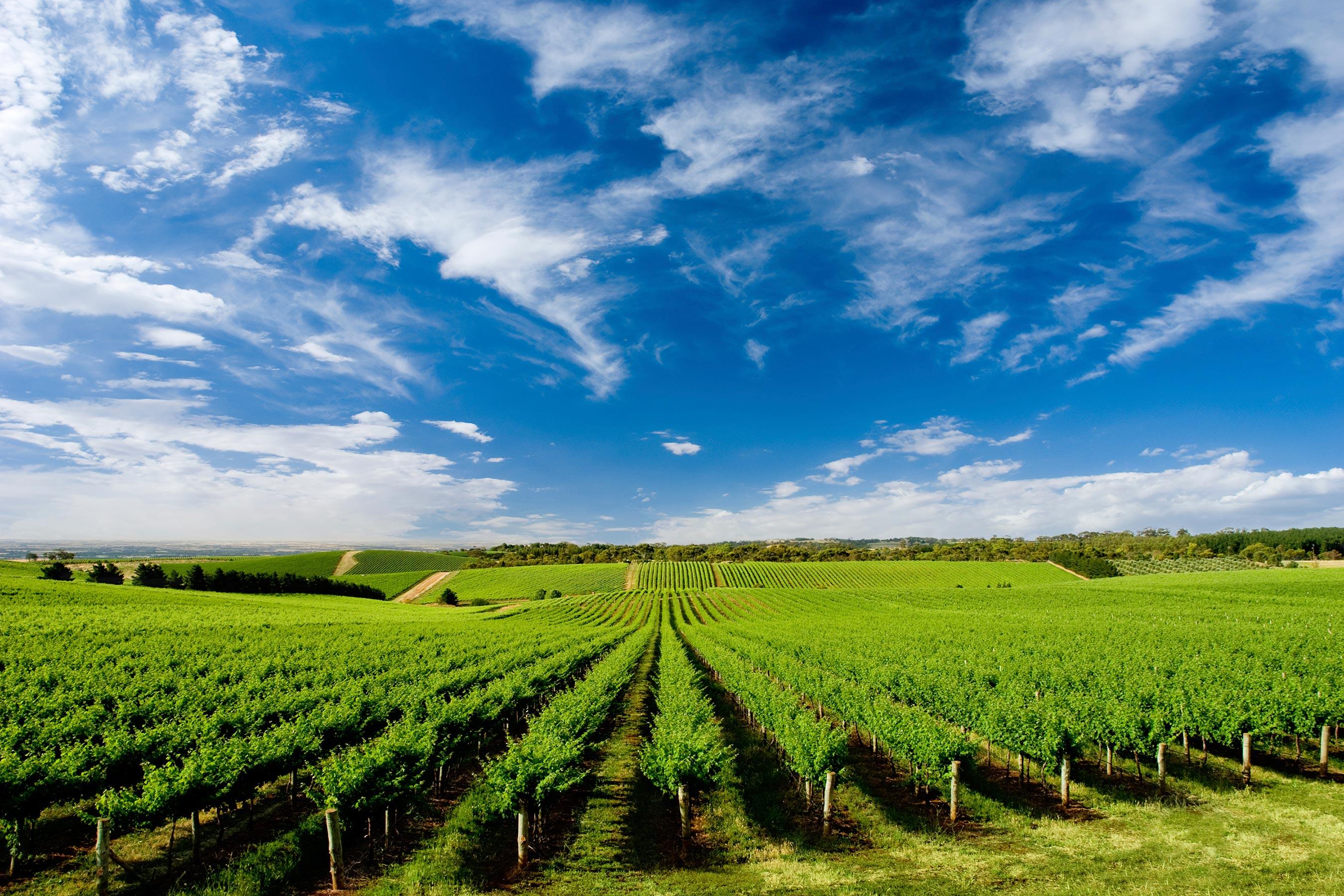 Blaxland-Wine-Group-Australian-Vineyard-Landscape
